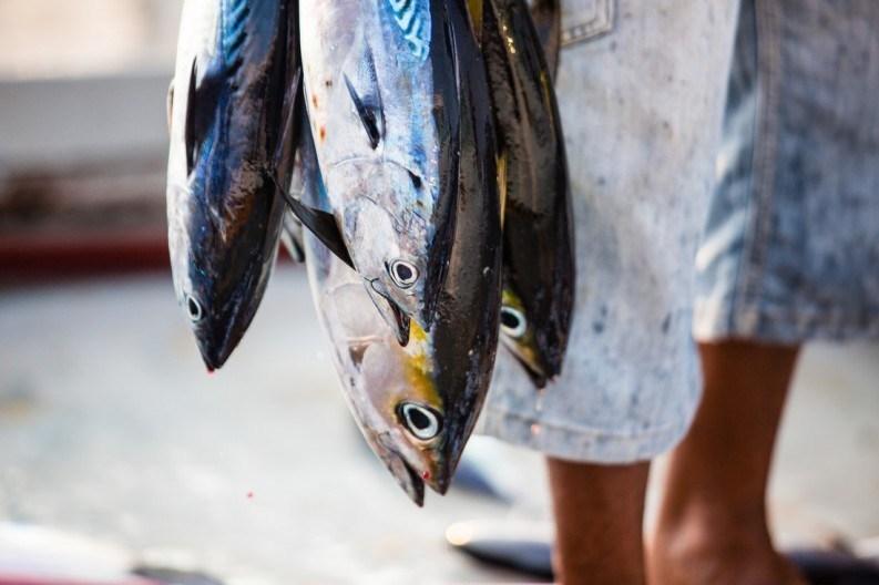 Four tuna fish held updside down