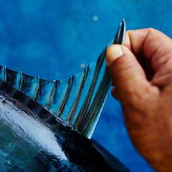Close-up of thumb and fingers holding a tuna fin on blue background