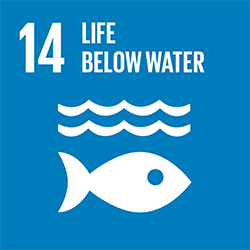 SDG 14 Life below water icon