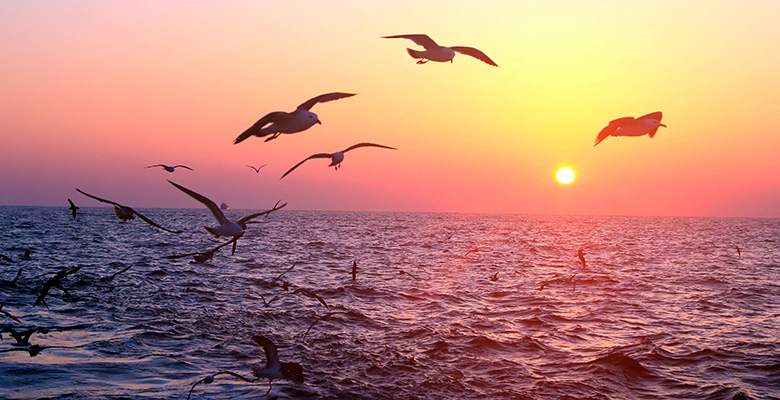 sunset-birds-over-ocean-780px-by-400px