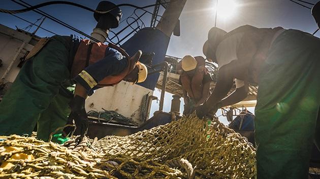 Miten MSC-sertifioidut kalastusyritykset kehittävät toimintaansa?