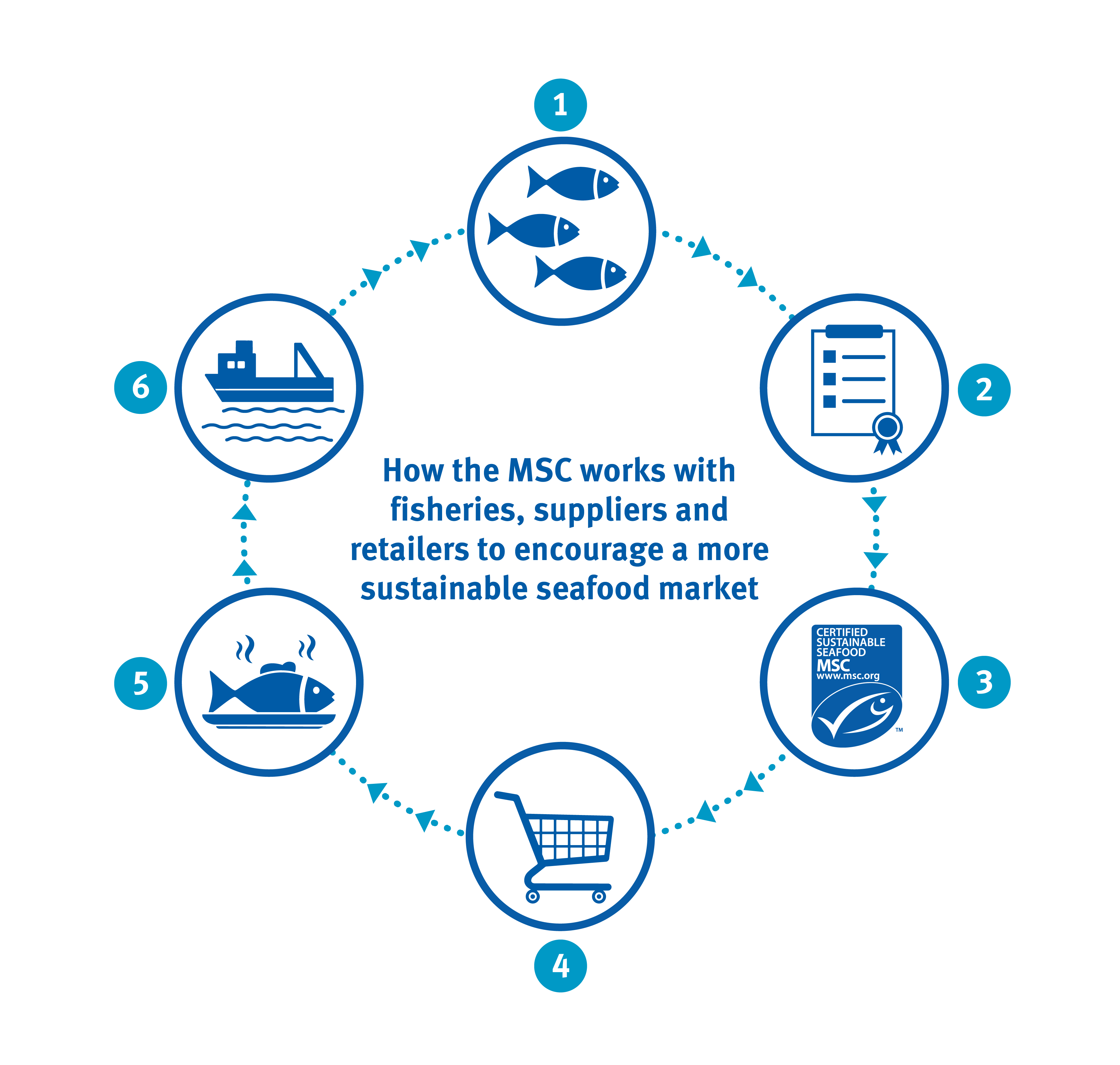 Infographic showing how the MSC works with fisheries suppliers and retailer to encourage a more sustainable seafood market