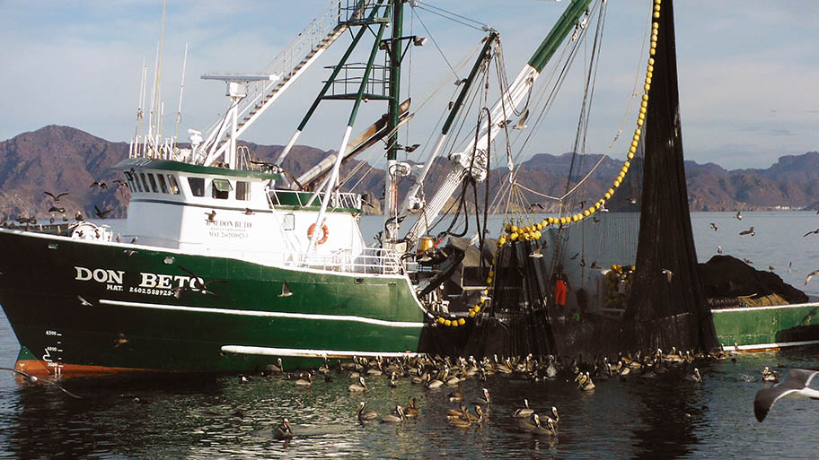 Green fishing vessel with purse seine net hanging over its side