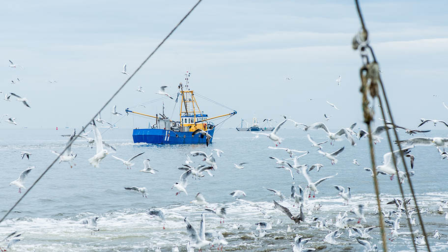 Blue fishing vessel on sea with gulls in foreground