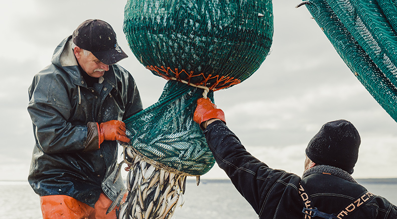 Two fishers working with a net to release fish.