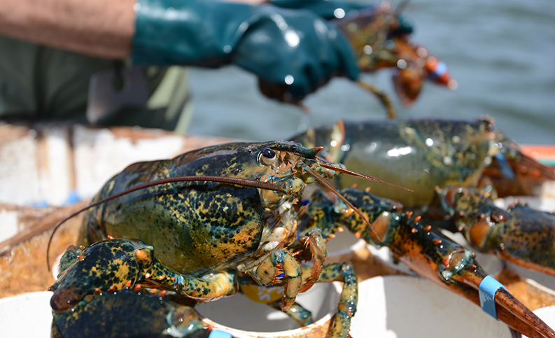 A closeup on a lobster's face.