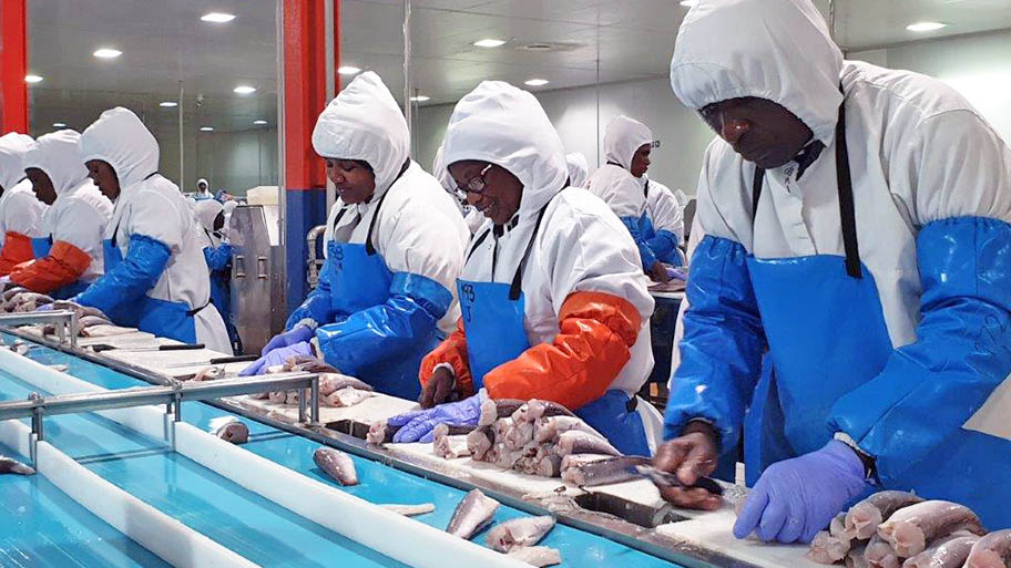 Women in protective overalls in a line, cutting hake fish in factory