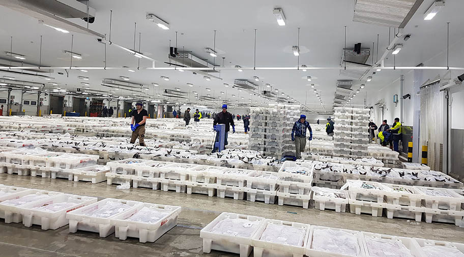 Large warehouse with stacks of crates of fish and workers moving between them