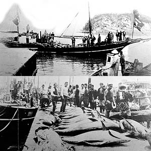 2 black and white photos of a boat by a jetty and large tuna fish landed on dock.