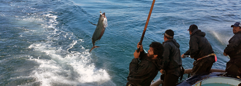 A man catching a fish with a line on a boat.