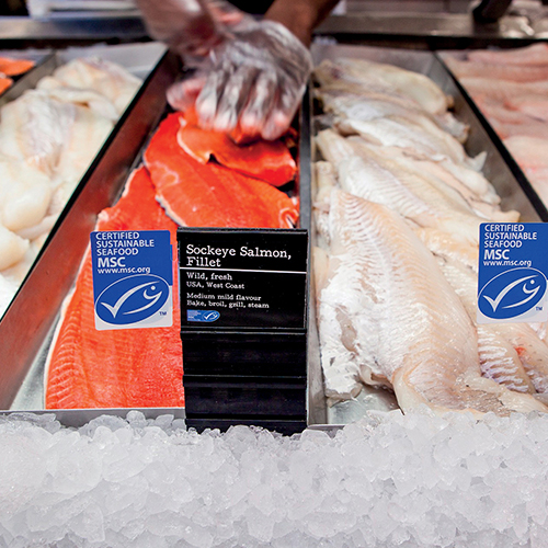 Gloved hand placing sockeye salmon fillets (left) on fish counter, next to haddock fillets (right)