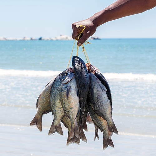 Hand holding a bunch of sea bream fish by rope with sea and beach behind