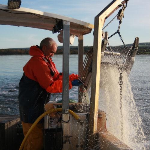 Clam dredging