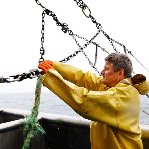Fishery certification guide spotlight OPTION 2
