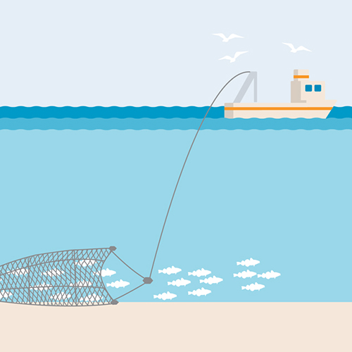 Bottom trawl fishing gear illustration