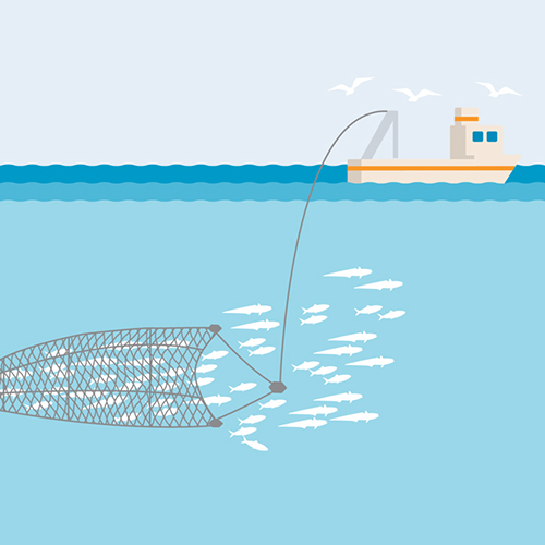 Midwater or pelagic trawl illustration