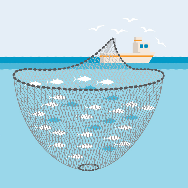 Purse Seine fishing gear illustration