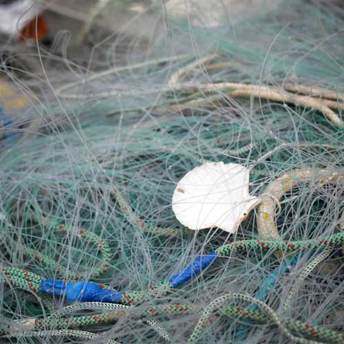 Ghost fishing nets with shell caught in it