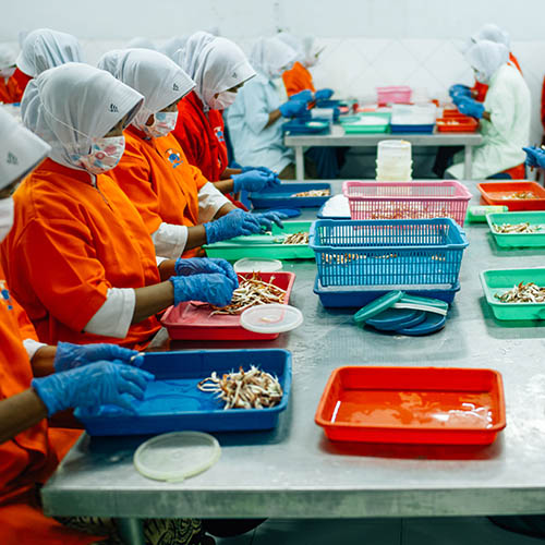 Women in protective clothing sitting at tables processing crab