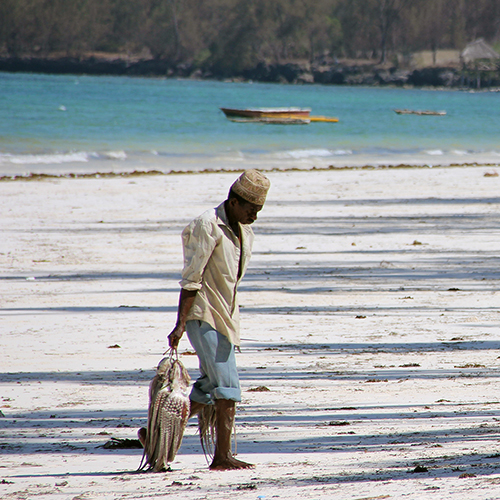 Octopus fisherman carrying catch on white beach, Zanzibar, Tanzania.