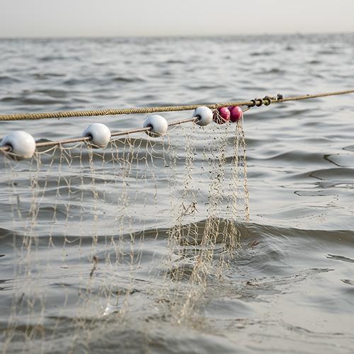 A fishing net hanging over the water