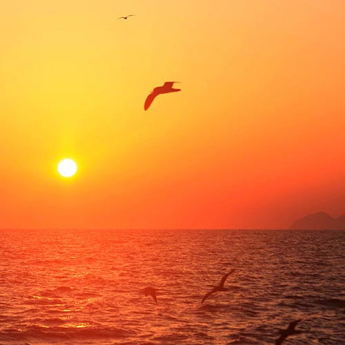 An orange sunset over the ocean with seagulls flying over