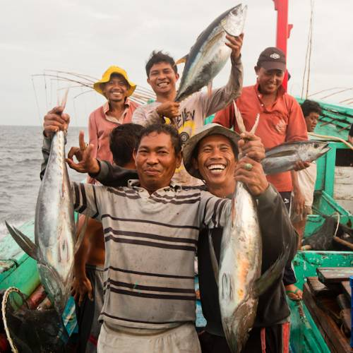 Indonesian Pole and Line fishers