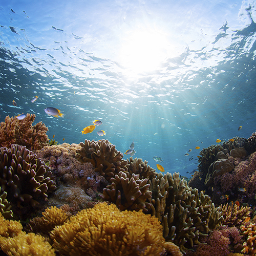 Underwater scene of a coral reef and tropical fish