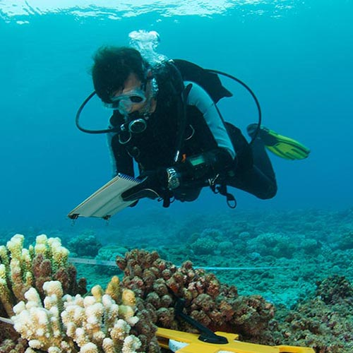 Scuba diver underwater by coral holding checklist