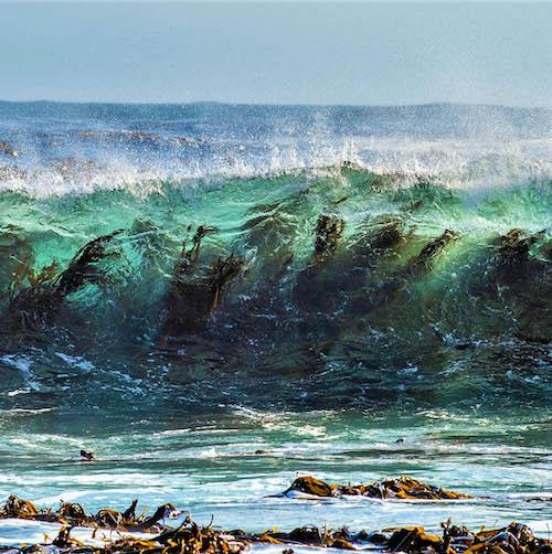 Seaweed underneath ocean waves