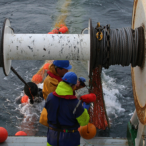 Researchers let down trawl net from back of boat