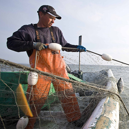Sustainable fisheries option 2 - header SPOTLIGHT