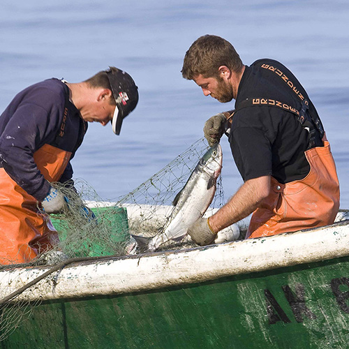 Sustainable fisheries option 3 - header SPOTLIGHT