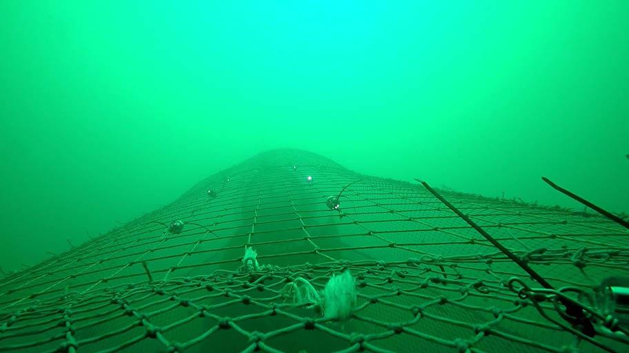 LED Lights on fishing net underwater