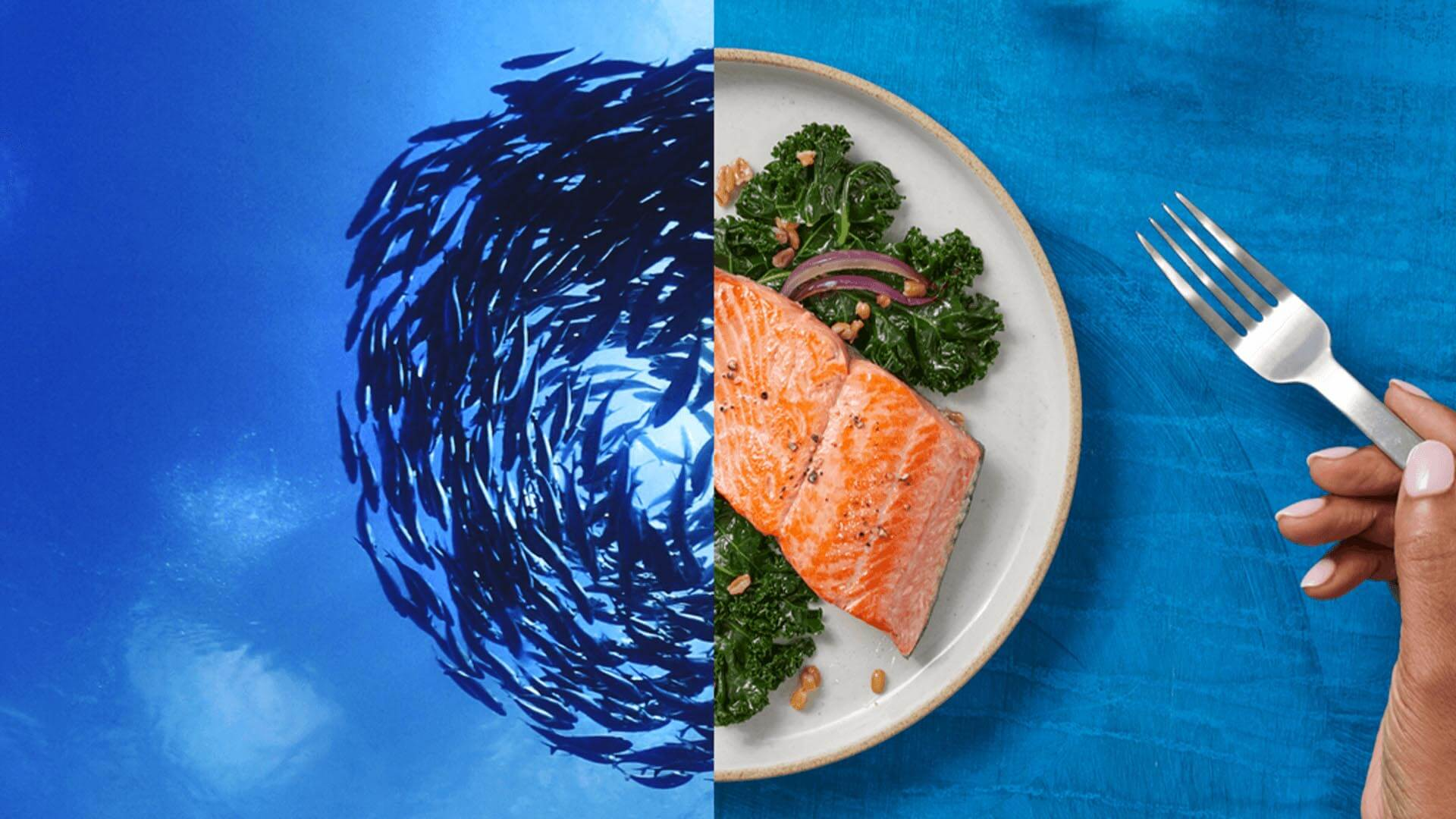 Split screen, left side blue fish swimming, right side plated salmon with fork