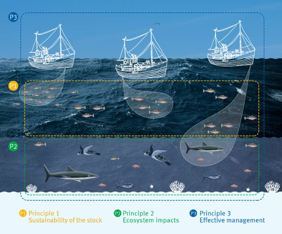 The 3 Principles of the Fisheries Standard