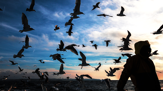 silhouette - person wearing hooded jacket stands in front of ocean and flock of birds