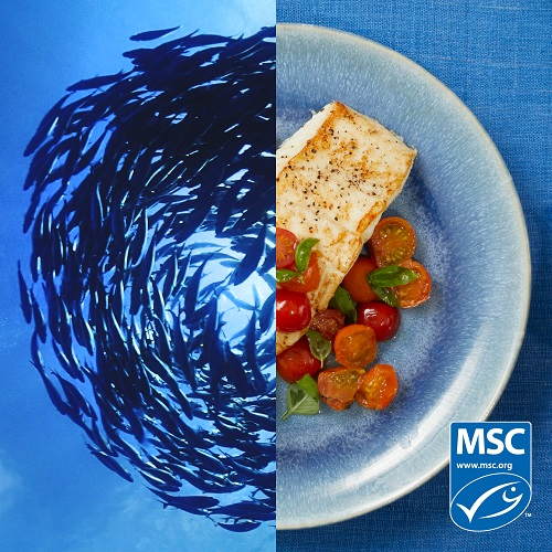Split screen image of a school of fish and a plated seafood dish.
