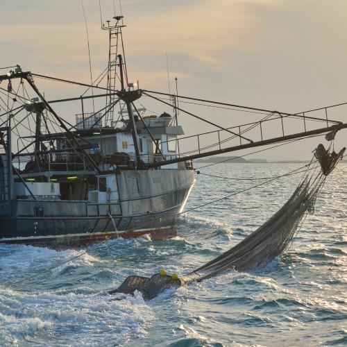 Australisches Garnelen fischendes Boot - 500x500