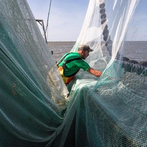 Hollandse garnalen visser met netten