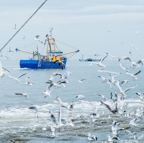 Vissersboot met zeemeeuwen
