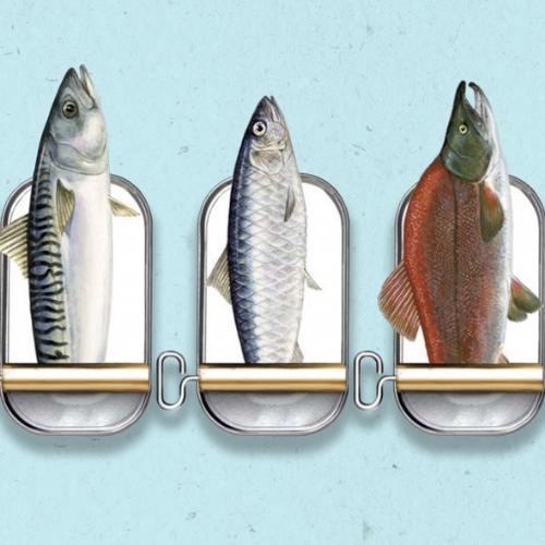 les conserves de maquereau, sardines et saumon