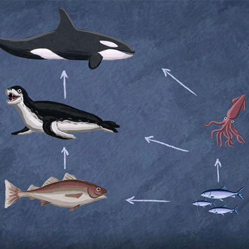 Sea Food Web