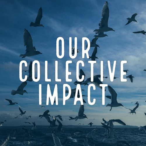 Healthy Oceans Spotlight 2 - Our Collective Impact
