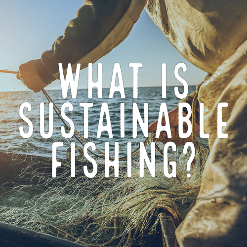 Healthy Oceans Spotlight 2 - What is Sustainable Fishing