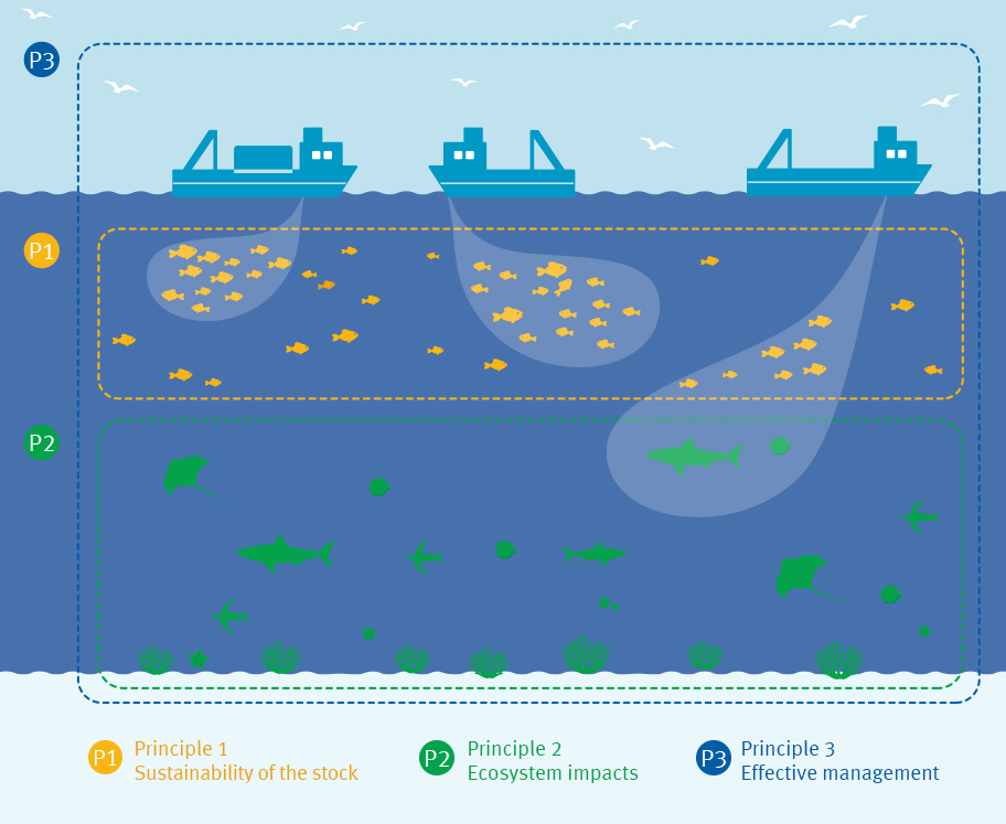 Fisheries Standard graphic