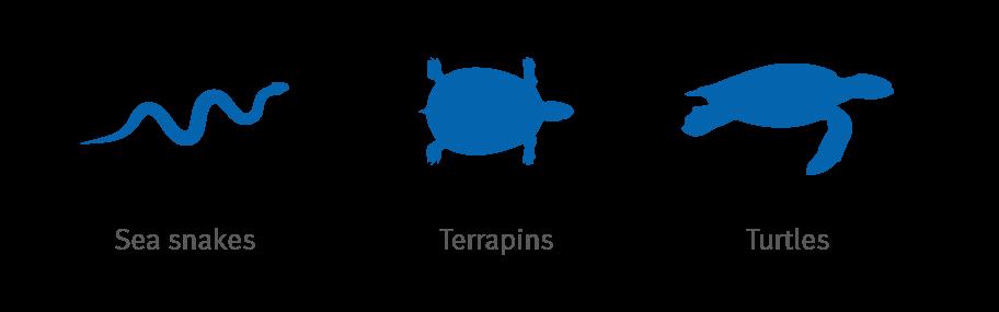 marine-reptiles-icons